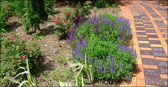 Now is the Time to Start a Landscaping Project – Deals on Perennials and Equipment Abound