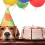 free stuff on your birthday
